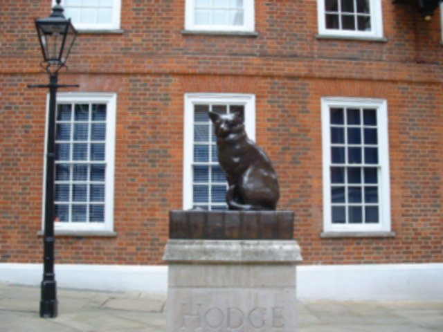 Hodge the cat
